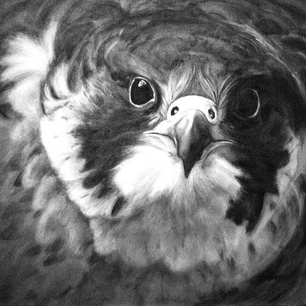 Stanley Bird_Daylights Dauphin_16x16_21x21