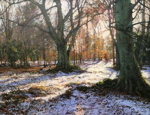 Jonathan Mitchell_Afternoon Light, Kates Wood_60x45_80x65_1950_unframed